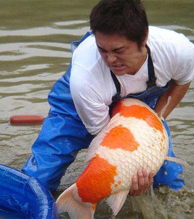 KoiFish_Person1.jpg